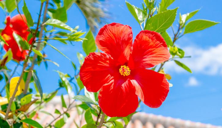 沖縄で過ごす特別な一日を最高に輝く思い出へ